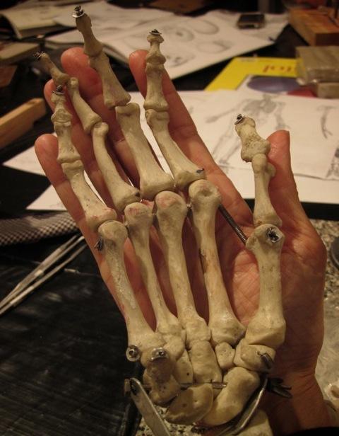 COSM anatomy201108170712011-08-0319-53-44133 of 138